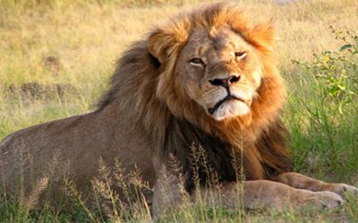 Why Cecil unmasks Humanity